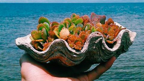 A kagylóba ültetett pozsgásokért odalesznek a sellőlányok