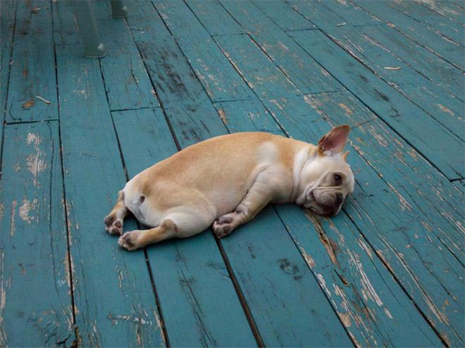 Kutyusok akik mindenhol elalszanak