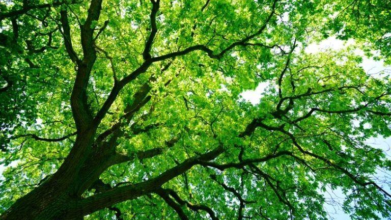 Nem kímélik a fádat, ha vezeték van a közelében