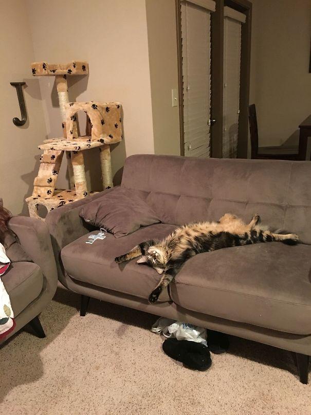 Ezek a cicák durván bekészültek a macskamentától