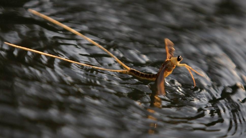 Tiszavirágokat lopott a szolnoki horgász