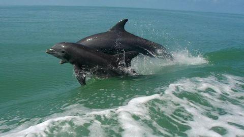 Kétfejű delfint fogtak a halászok – fotó