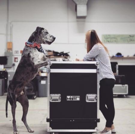 10 kutya, aki túl nagy ahhoz, hogy kutya legyen