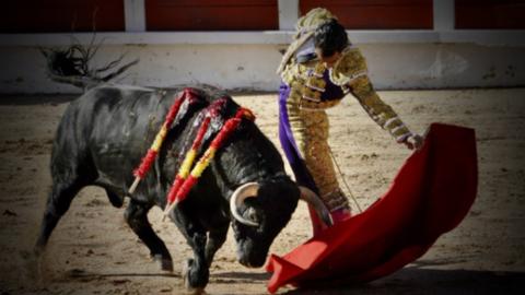 Halálra döfte egy bika a híres spanyol matadort