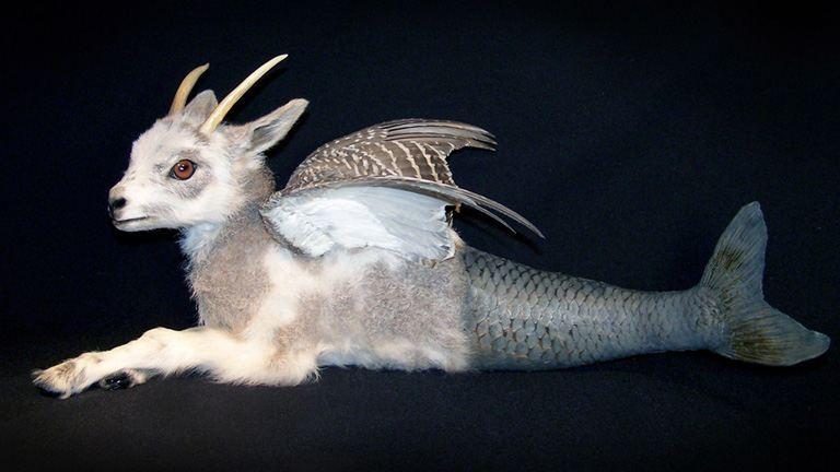 5 művész, aki döglött állatokból készít műtárgyakat