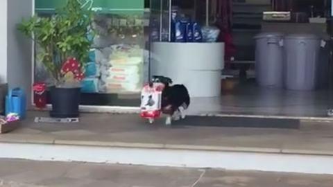 Napunk hőse a kutyus, amely mindennap bevásárol magának