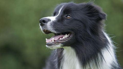 Vádat emeltek a francia turista kutyáját lelövő magyar vadász ellen