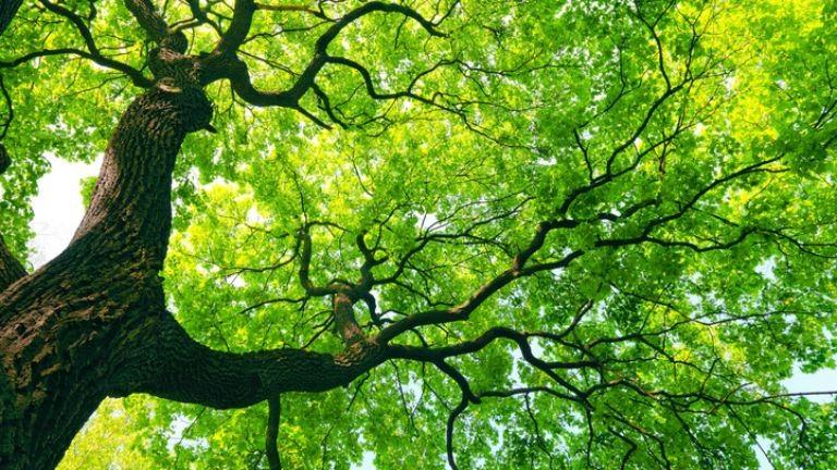 Fennakadt a fán egy kisrepülő Zircnél