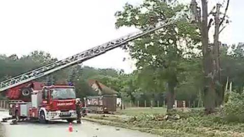 30 méteres fa dőlt a kerekesszékes nőre