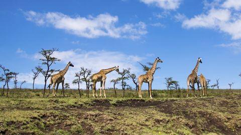 7 csodás, veszélyeztetett hely, amit látnod kell, mielőtt eltűnik a Föld színéről