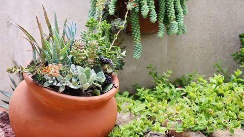 7 szárazságtűrő növény, amire esküsznek a kertészek