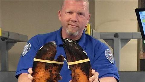 Kilenckilós élő homárt találtak a reptéri poggyászban