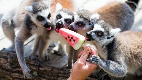Hűsölnek a gyöngyösi állatkert lakói – galéria