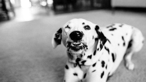 3 évébe telt a fotósnak, hogy megtanítsa mosolyogni a kutyáját