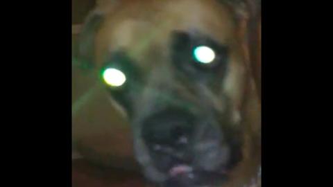Minden önuralmát elveszíti a kutya, ha sétálni viszik - vicces videó