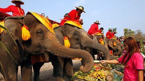 Rabszolgasorsban élnek a thaiföldi turisták kedvenc elefántjai
