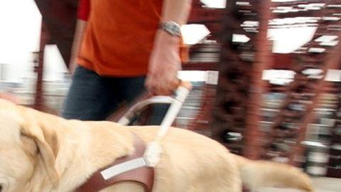 Letépte a vonatlépcső a vakvezető kutya körmét