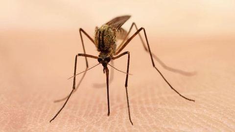 Új, veszélyes szúnyogok jelentek meg hazákban