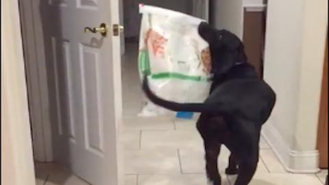 Kaját lop a kutya, mikor azt hiszi, senki nem figyel – vicces videó