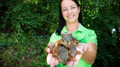 Mókuskölykök estek ki fészkükből a vihar miatt, a Veszprémi Állatkert fogadta be őket