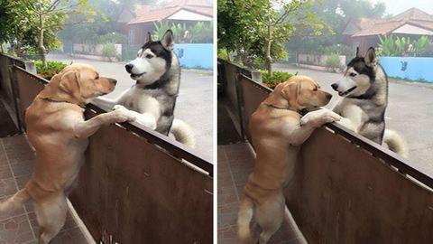 Cukiság: megszökött a kutya, hogy meglátogassa legjobb barátját