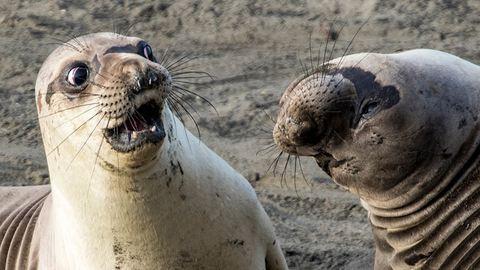 Na jó, az idei Comedy Wildlife fotópályázat tényleg nagyon vicces lesz