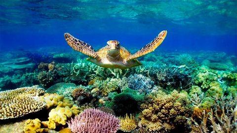 Videó: segíts ennek a teknőcnek megmenteni a Nagy-korallzátonyt!