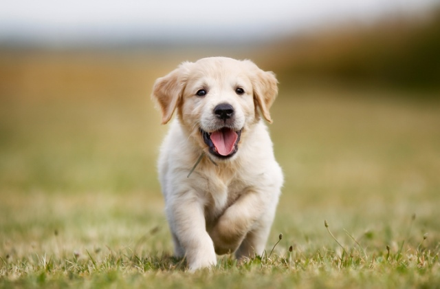 Ez a kutya illik a legjobban a csillagjegyekhez