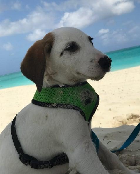 Ezen a mesebeli szigeten egész nap mentett kiskutyákkal lóghatsz