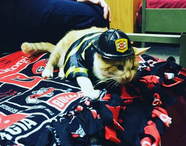 Tűzoltók fogadták be az elárvult cicát