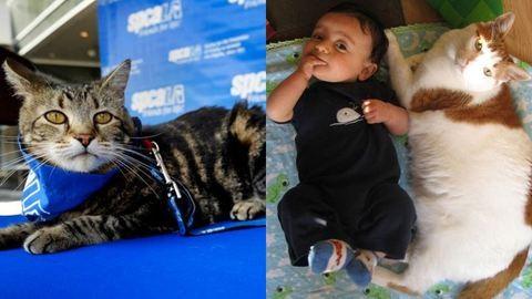 Gondoskodó, óvó állatok – ezek a macskák