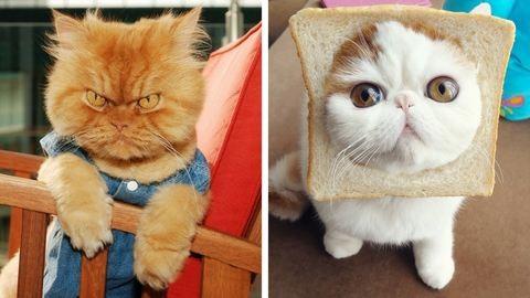 Insta macskák, akiket követned kell
