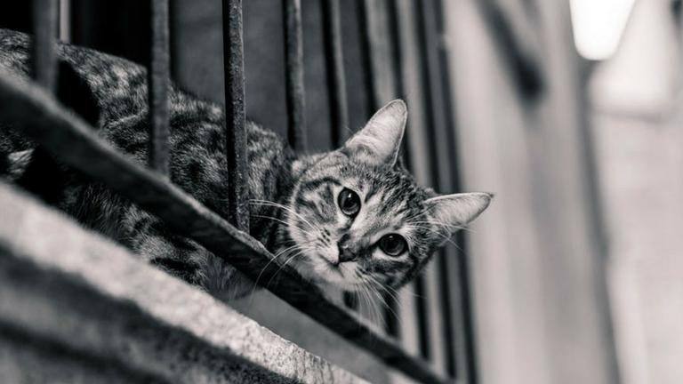 Így tedd macskabiztossá a lakást, az erkélyt