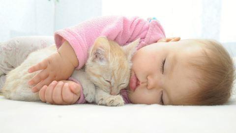 Jön a baba, mi legyen a macskánkkal?