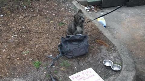 Barátaira bízta a kutyáját, míg börtönbe vonult – már másnap kirakták az utcára
