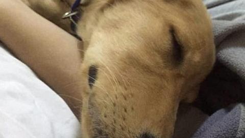 Így örült gazdájának a kutya, amelyet 50-szer lőttek meg a reptéren