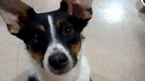 Suttogni is megtanult az udvarias kutya, hogy ne zavarja a szomszédokat – cuki videó