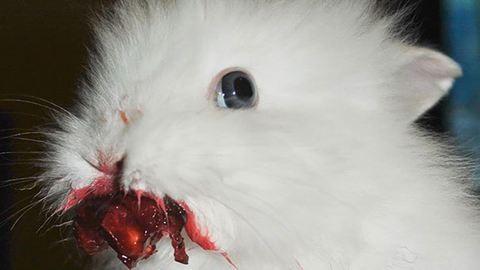 Ezek az állatok nem fenevadak, csak imádják az epret