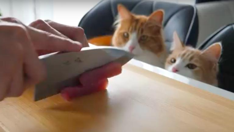Macskája kedvéért állt szusiséfnek az odaadó gazdi