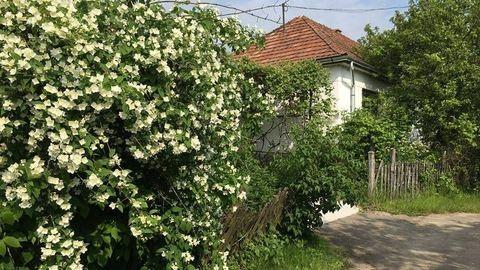 Egy holland megvett egy egész magyar falut