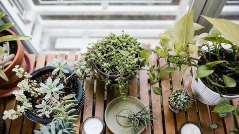 Így tartsd életben a szobanövényeidet a nyári hőségben