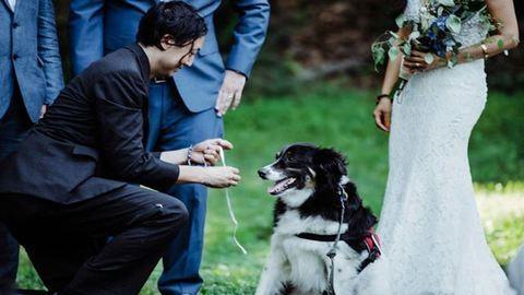 Háromlábú, mentett kutyus volt a gyűrűhordó az esküvőn – cuki fotók