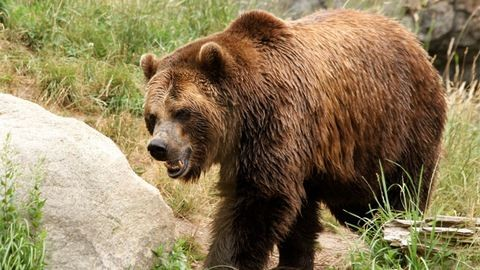 Medvékkel futott össze az erdőben, menekülés helyett levideózta őket – videó