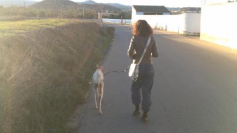 Kilométereken keresztül vezette megmentőit kölykeihez a törött lábú kutya