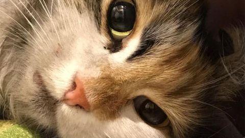 Elkapták az óbudai macskanyúzókat