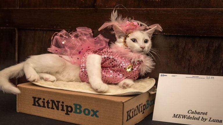 Egy hotel macska-divatbemutatót tartott, és igen, csodás volt