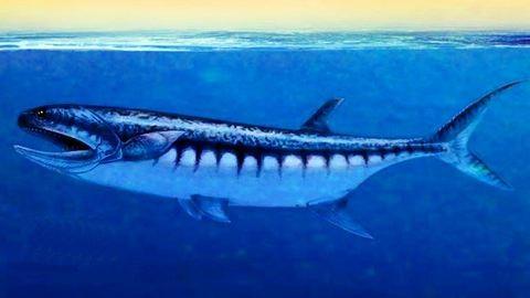 Kőbe zárt, ősi cápát fedeztek fel