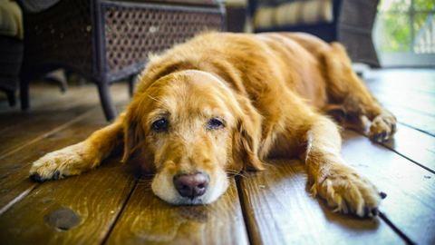 Te eladnád a kutyád kétmillió forintért?