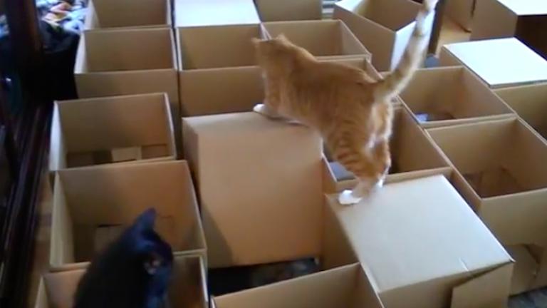 50 kartondobozból épített labirintust a macskáinak egy férfi – videó