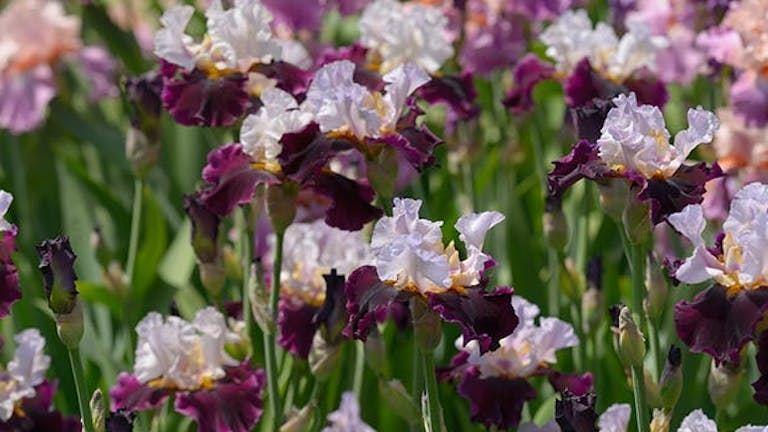 9 csodaszép évelő virág, amit ősz elején érdemes elültetni